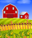 Red Barn and Shed in Fields with Corn